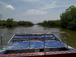 American Airboat Tours