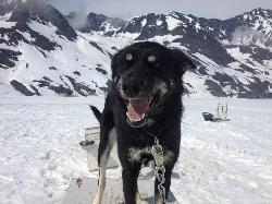 Aurora Sled Dog Tours