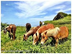Basque Tours, Private Guided Tours in the Basque Country