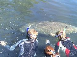 Nature Coast Manatee Tours