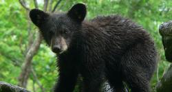 Black Bear Observatory