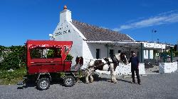 Inis Mor Pony and Trap Tours with John
