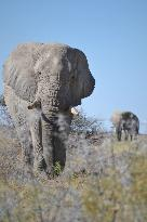 Rhino Africa Safaris - Day Tours