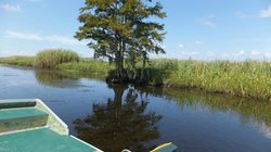 Delta Airboat Express - Tours