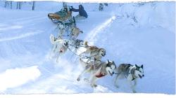 Krabloonik Dogsled Rides
