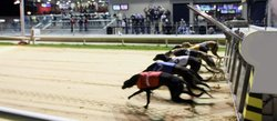 Mullingar Greyhound Stadium