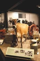 Jersey Museum