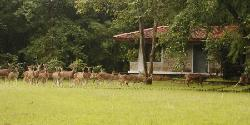 Royal Tiger Resort Kanha National Park