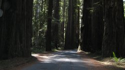 ‪Giant Redwoods RV & Camp‬