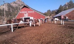 Estes Park Horseback