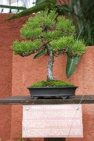 Jardn-Museo del Bonsai