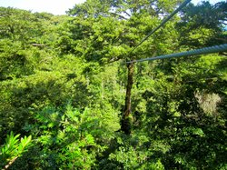 Sky Zipline Canopy Tour at Red Frog Beach