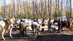 Algonquin Highlands Trail Riding & Farm