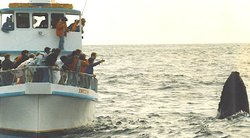 Indian Whale Watch- Day Boat Tours