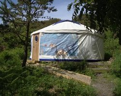 Trellyn Woodland Camping
