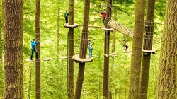 Go Ape at Moors Valley Ringwood