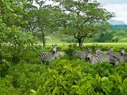 Half-Day Arusha National Park Tour