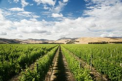 Marlborough - Wine Capital of New Zealand