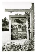 ‪Cape May Bird Observatory‬