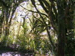 The Goblin Forest