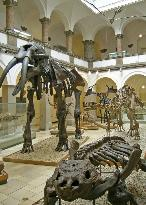 Paleontological Museum Munich