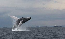 Whale Watching Panama - Day Tours