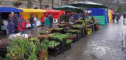Tavistock Farmers Market