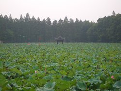 Yilong Lake Lotus Garden