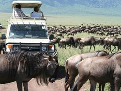Wildlife Kenya Safaris - Day Trips