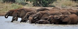 African Tracks Safaris - Day Tours