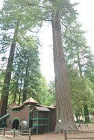 Redwoods River Resort & Campground