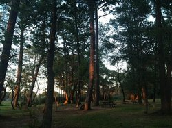Pine Grove Campground and Waterfowl Park