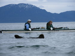 Glacier Bay Sea Kayaks - Day Tours