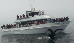 ‪Stagnaro Sport Fishing Charters & Whale Watching Cruises‬