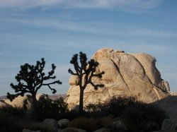 Joshua Tree Adventures - Day Tours
