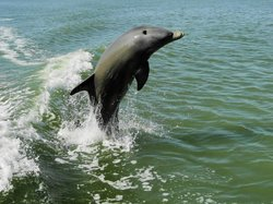 Marco Island Boat Tours