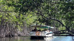 Blue Mahoe Tours - Sightseeing Tours