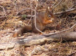 Freshfield Squirrel Reserve