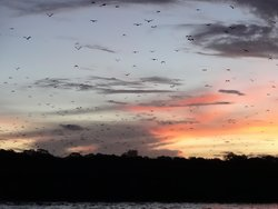 Kalong (Flying Foxes) Island