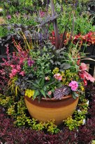 Phoenix Perennials and Specialty Plants Ltd.