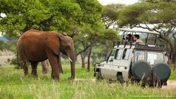 Tanzania Private Tours