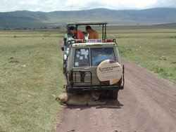 Africa Safari Experts Day Tours