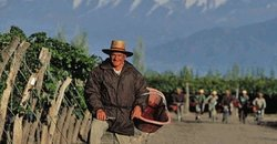 Mendoza Wine And Tours