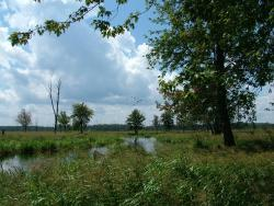 Minesing Wetlands Conservation Area