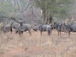 Kruger Africa Safaris - Day Tours