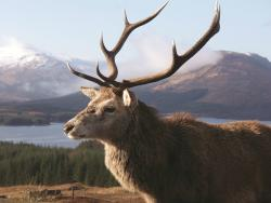 Highland Explorer Tours - Day Tours