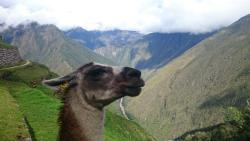 Action Peru Treks - Day  Tours