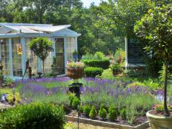 Blooming Hill Lavender Farm