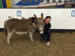 The Donkey Sanctuary Assisted Therapy Centre