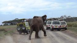 African Memorable Safaris